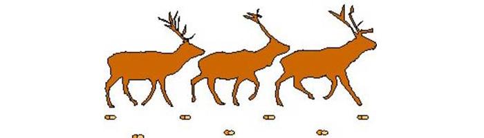hayvan-izleri-diyagonal