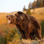 Kamp Faaliyetlerinde Vahşi Hayvanlara Karşı Alınacak Önlemler
