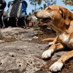 Doğada, Yürüyüşte Köpekle Karşılaşma
